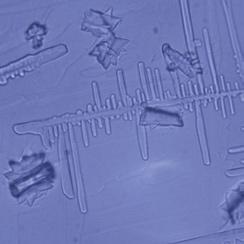 http://www.orion-technologies.fr/sante/wp-content/uploads/2016/11/crystal-image-analysis-sans-UMH.jpeg